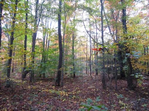 Winterberry Woods