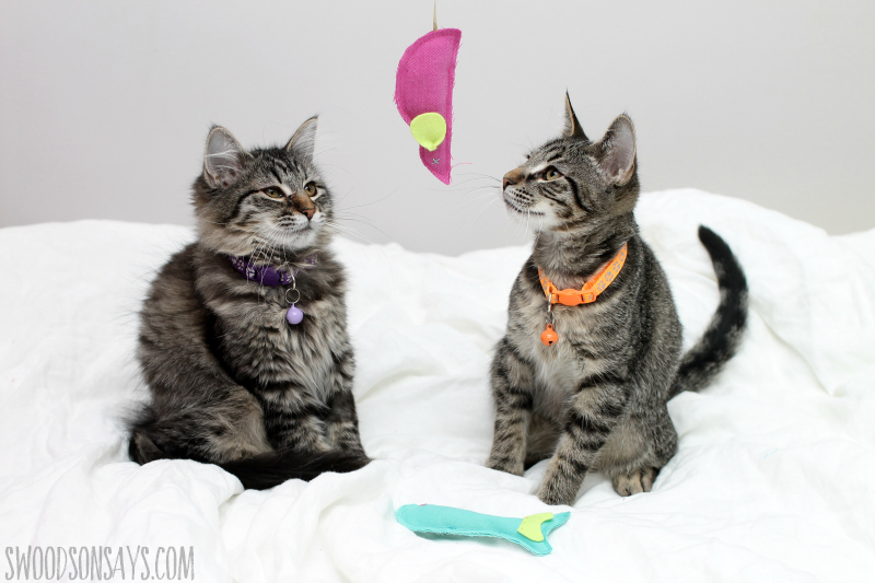 handmade cat toy idea