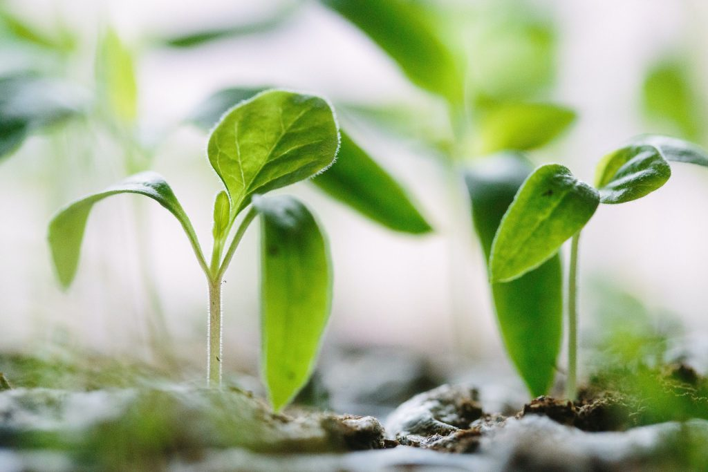 Plants growing by Francesco Gallarotti on Unsplash