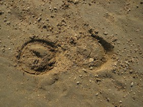 horses came across this sandbar
