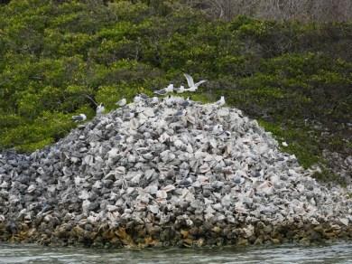Berg von leeren Conch-Schnecken- Gehäusen