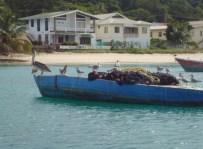Pelikane und anderes Gefieder