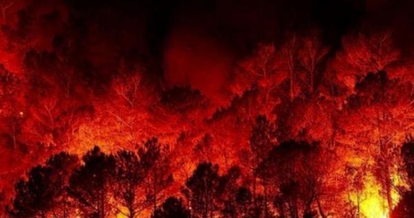17200290111599640507 - الحرائق تمتد إلى ريف إدلب.. والدفاع المدني يعلن حالة الطوارئ