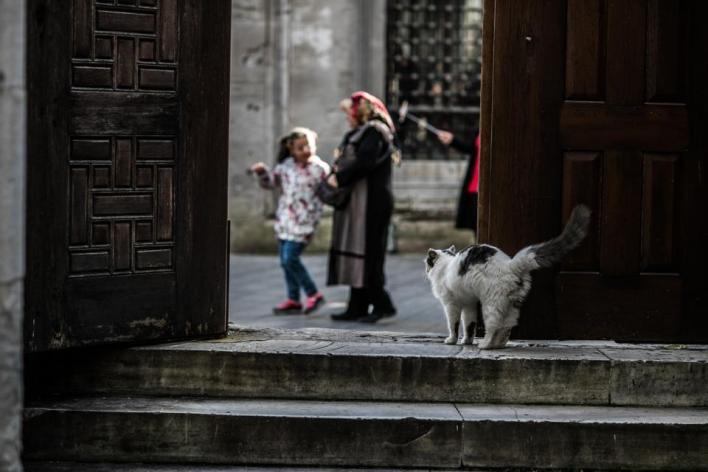 يعيش في تركيا ملايين القطط ما بين قطط تُقتنى في المنازل وأخرى تُرعى في الشوارع والأماكن العامة، وأعداد أخرى تحتضنها الملاجئ