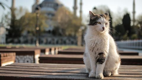 """9109627 4551 2563 22 242 - عاصمة قطط العالم.. تَعرَّف أبرز المعلومات عن """"جمهورية القطط التركية"""""""