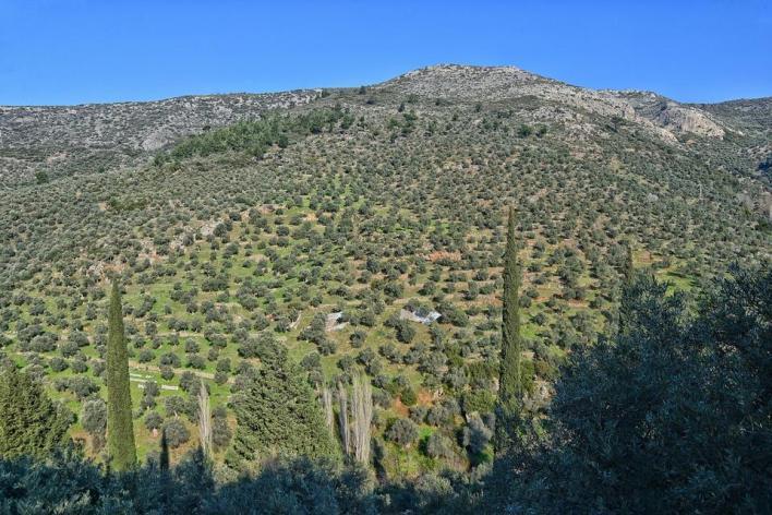 حسب أحدث تقاريروزارة الزراعة والغابات التركيةلعام 2019، يوجد في عموم البلاد 182 مليون شجرة زيتون