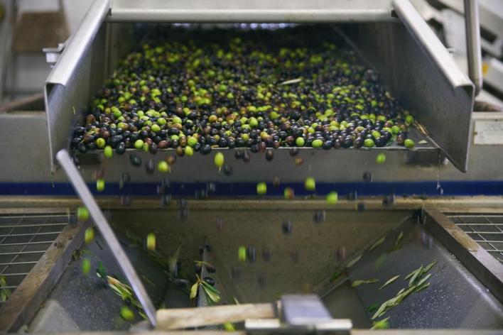 تهدف الحكومة ليس فقط إلى زيادة الكمية المنتجة من زيت الزيتون، بل وإلى رفع جودة الزيت للمنافسة عالمياً