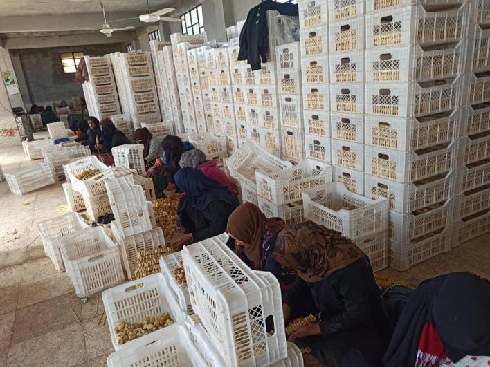 مشاغل التين المجفف في الشمال السوري