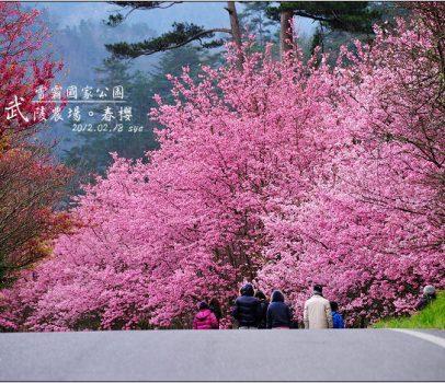 【台中 賞櫻景點】 武陵農場。雪霸國家公園 (03 春-櫻花、冬-梅花)