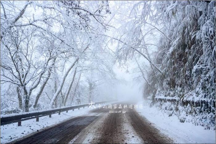 太平山賞雪