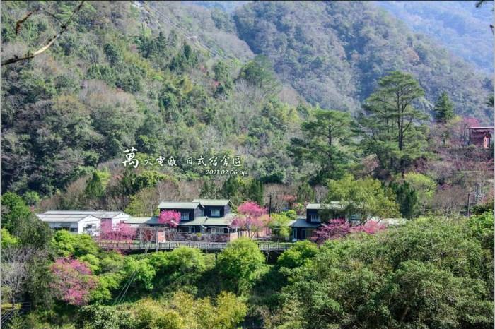 【南投】萬大電廠台電日式宿舍 | 令人屏息的賞櫻秘境