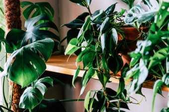 Догляд за кімнатними рослинами і підтримуюче (періодичне) прибирання