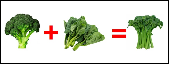 The Hybridization of Broccoli and Gai Lan