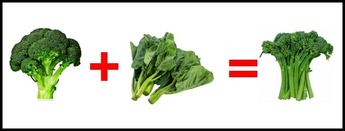 The Hybridization of Broccoli and Gai Lan