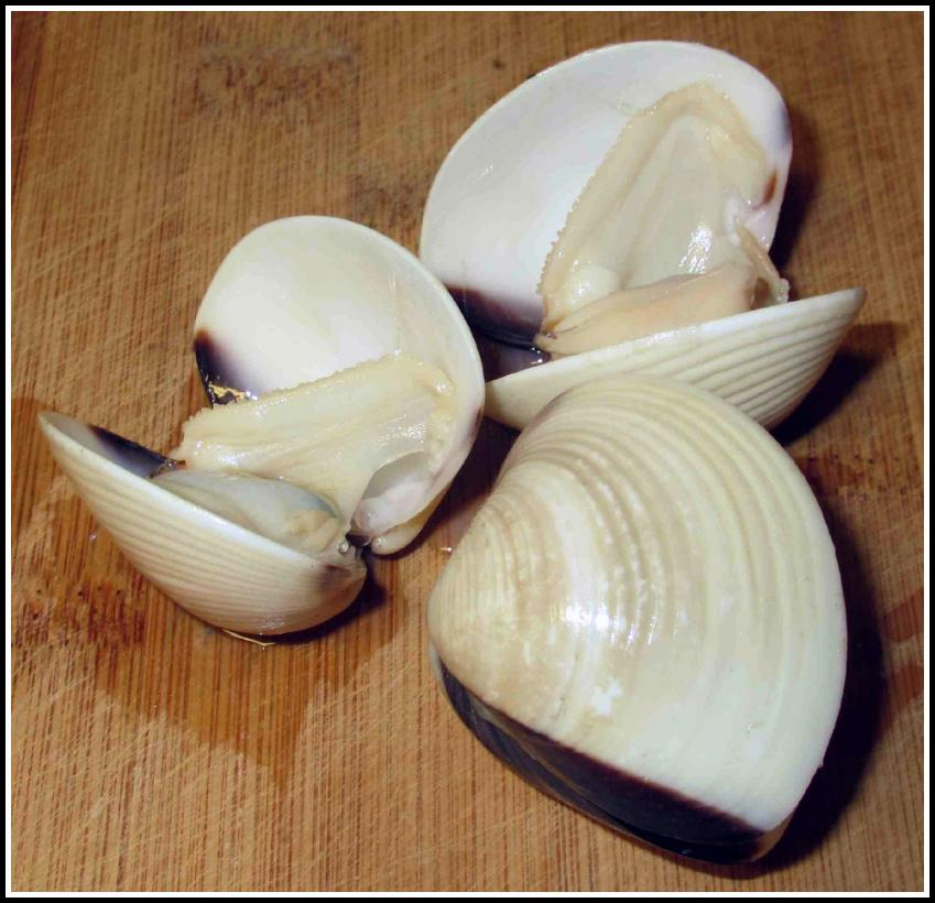 The Clams Used in this Recipe