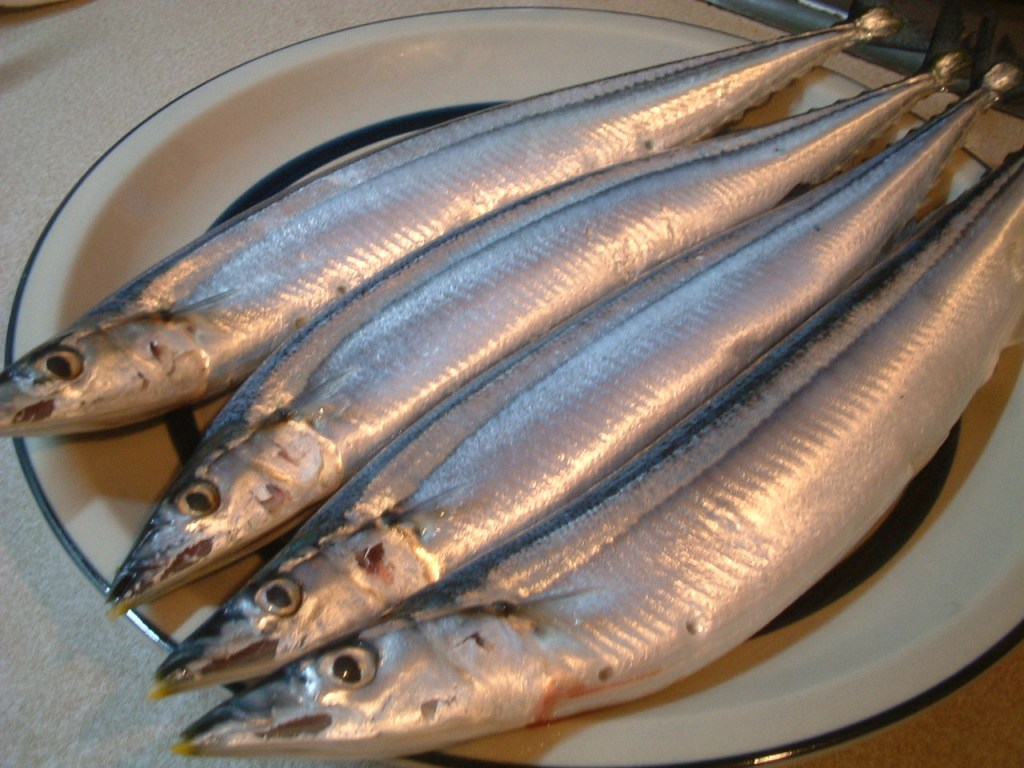 'Sanma for Sashimi' by Tsuchiya Yoshihiro courtesy of Wikimedia Commons
