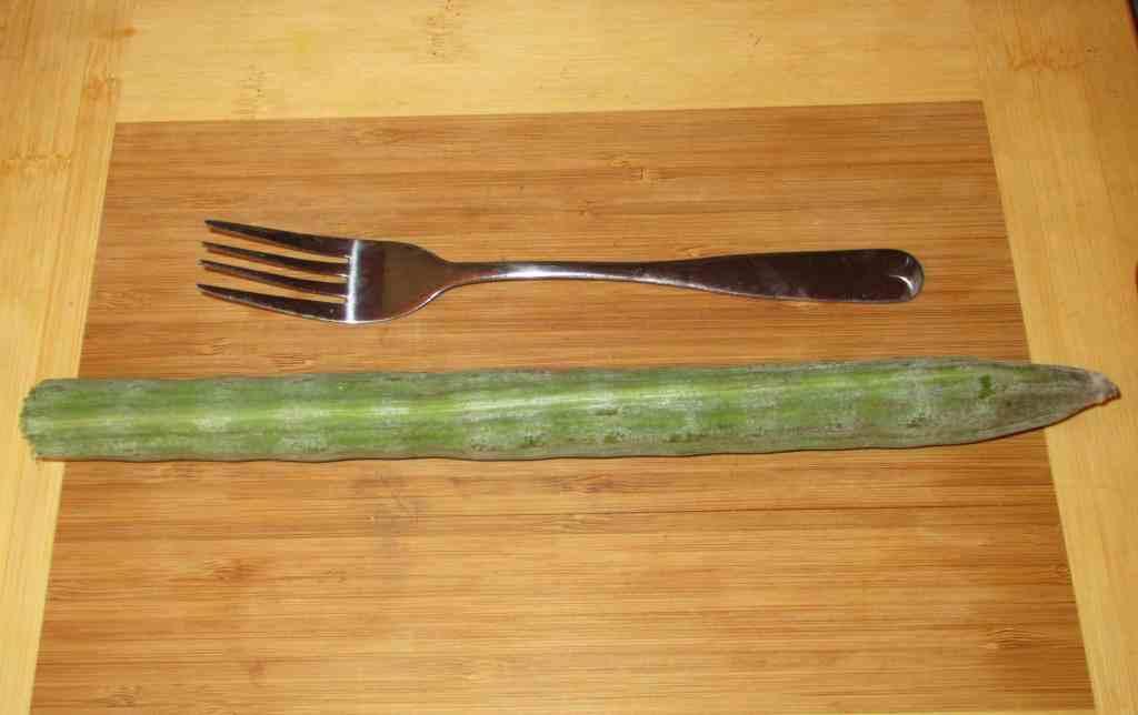 A single Drumstick (Saijan) Seedpod