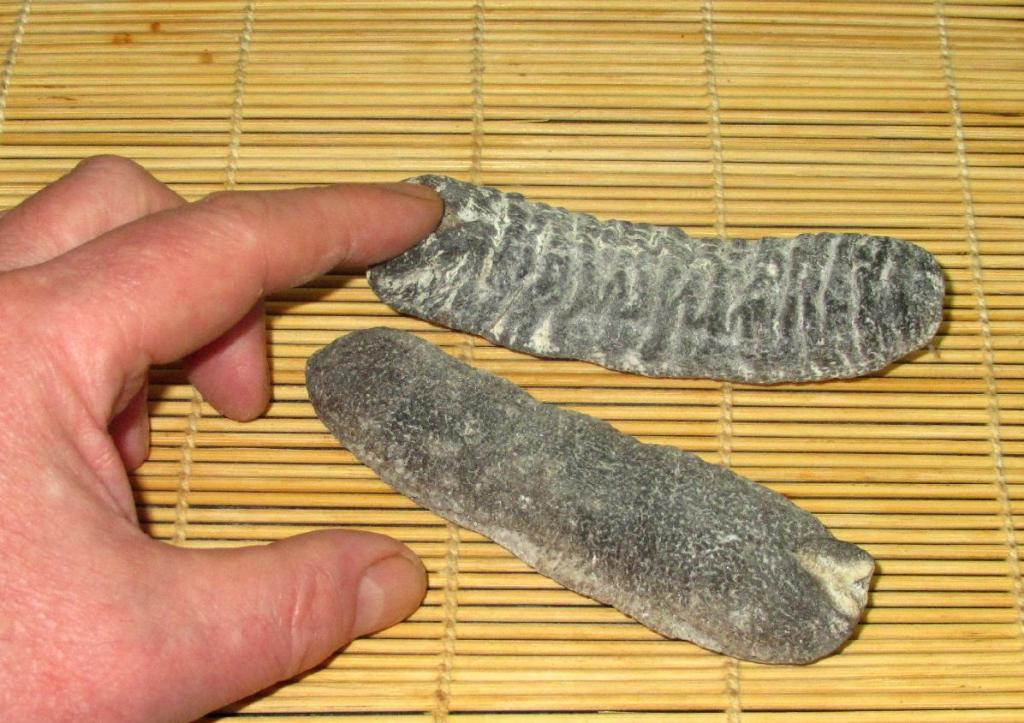 Demonstrating the size of Dried Sea Cucumber