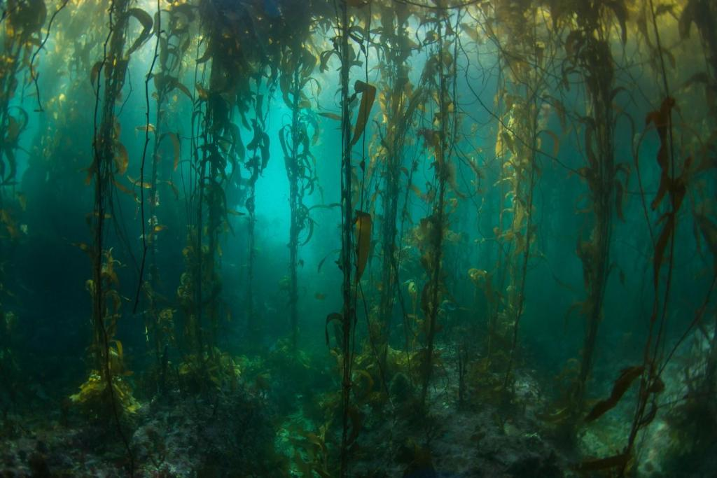 A Kelp 'Forest'