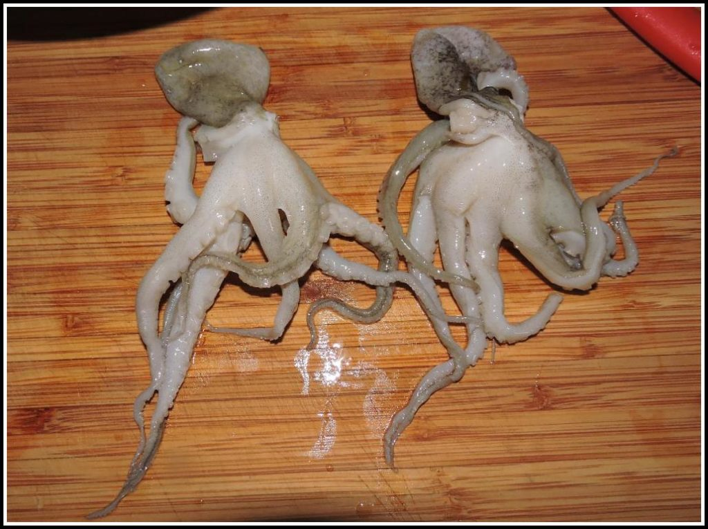'Baby' Octopuses
