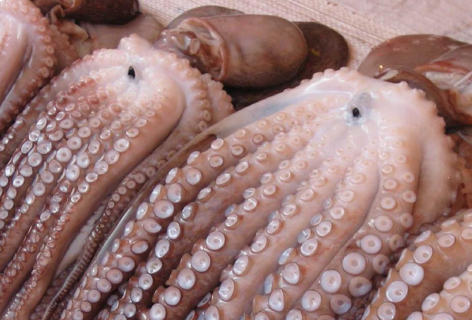 Octopuses showing the internal 'beak'