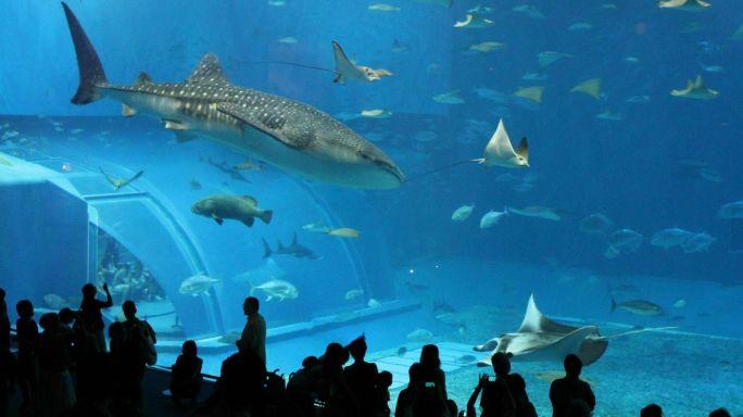 Veracruz ´s Aquarium View