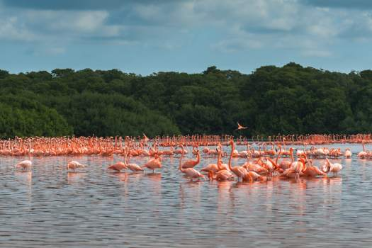 Flamingos at Coloradas Yucatan