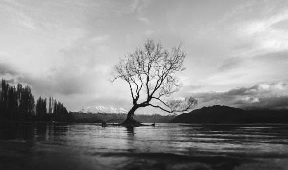 Lonely tree in middle of a lake