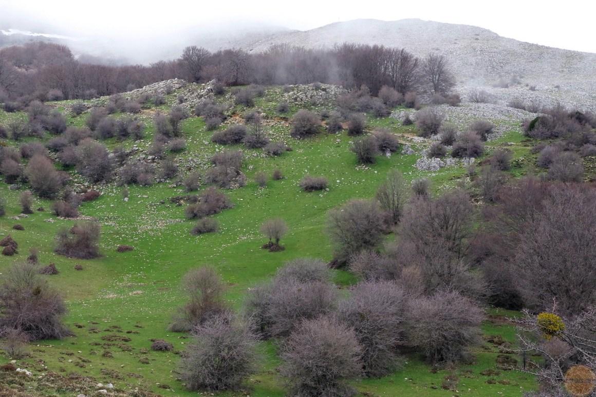 góry madonijskie