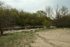 Etobicoke Valley Dog Park - example of creek access within the dog park