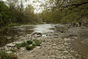 Etobicoke Valley Dog Park - Approximately 1 km into the dog trail