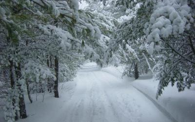 Weather Cancellations and Closures
