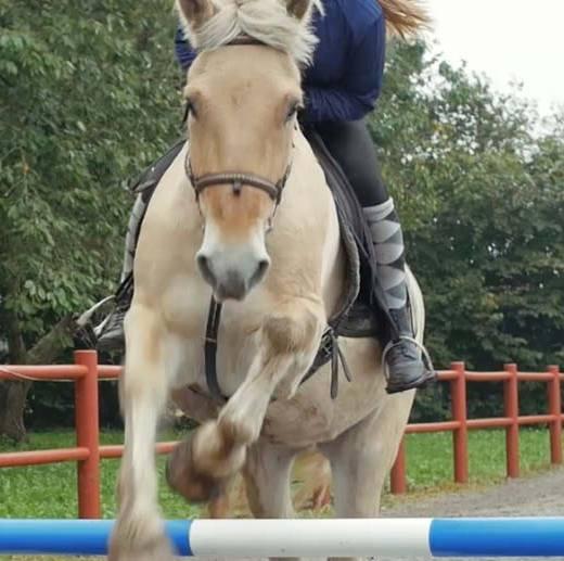 hest7