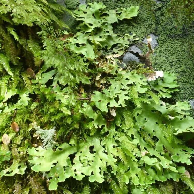 Beautiful lichen and moss