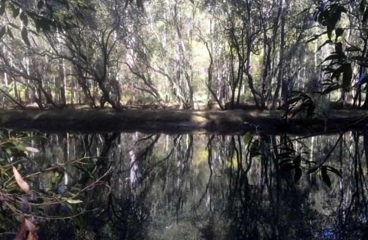 Carroll Creek, Davidson