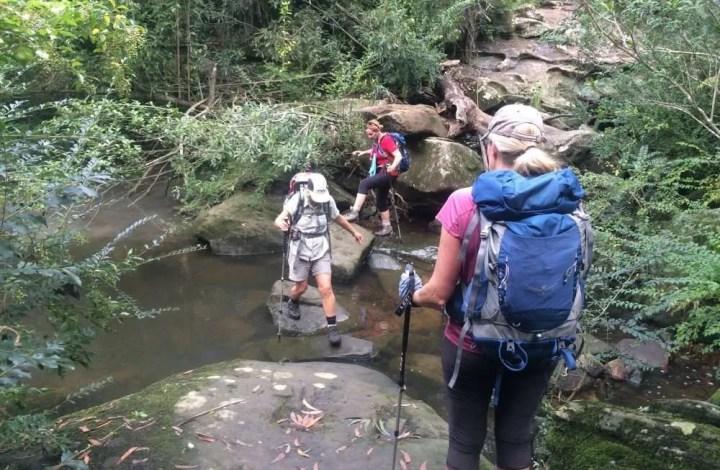 Lane Cove riverside loop: Blackbutt creek crossing