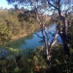 Middle Harbour from the Casuarina Track