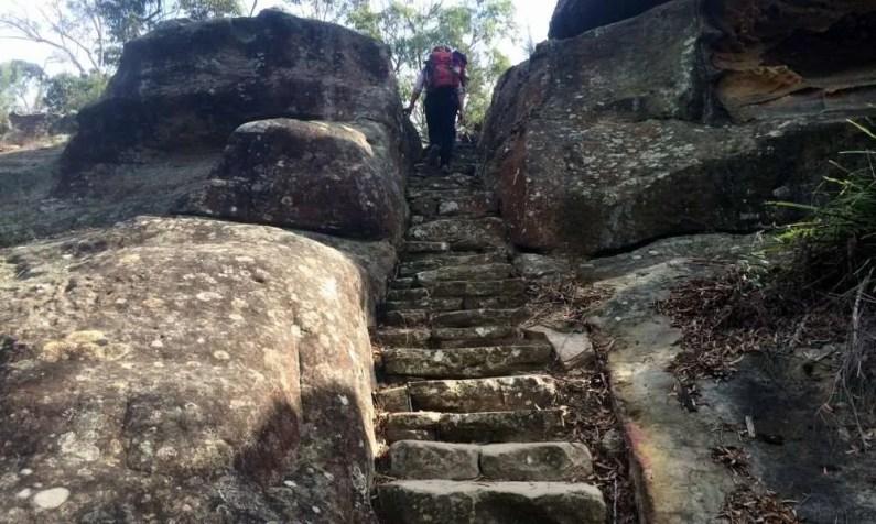 Berowra to Mt Ku-ring-gai: climbing Mt Kurringgai steps