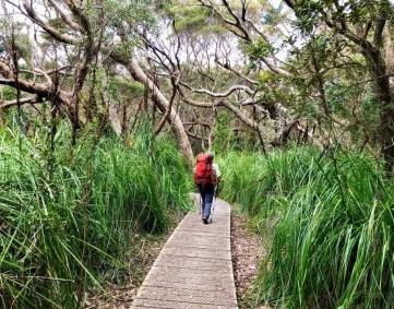 Three Capes Track - boardwalk through grasslands
