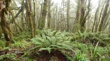 Ferns and mossy trees