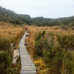 Heaphy Track Gouland Downs