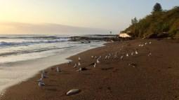 SOPC Coalcliff Beach