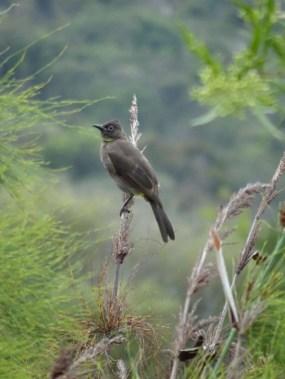 Table Mountain Bird 1