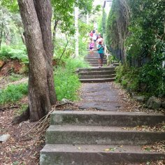 Taylors Bay Stairs - 147