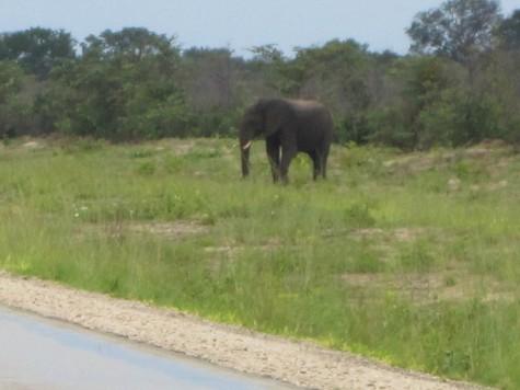 Spennende å passere ville elefanter langs veien i Botswana!