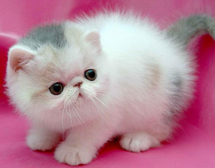 Выбираем кличку для кошки девочки русские легкие и самые красивые