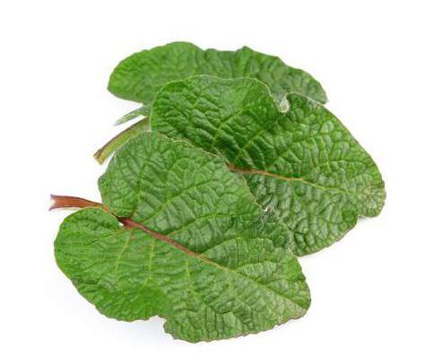 plante medicinale pentru tratamentul articulațiilor ligamentelor și oaselor