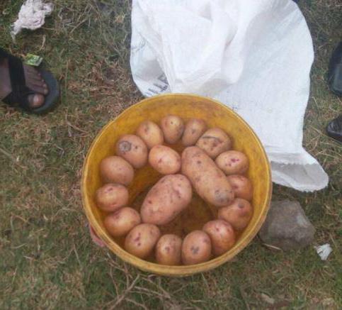 Сколько килограмм картошки в большой сетке. Как посчитать, сколько килограмм в мешке картошки. Купить овощную сетку. Выбор поставщика