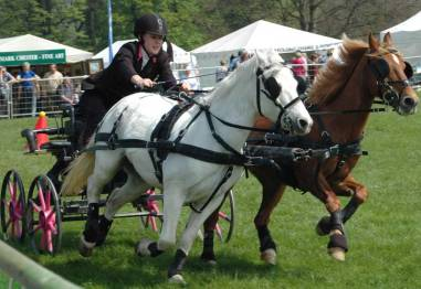 In 2008 we watched carriage driving trials.