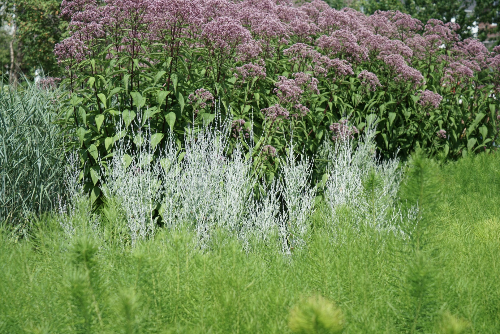 sylvan-gardens-plant-profiles